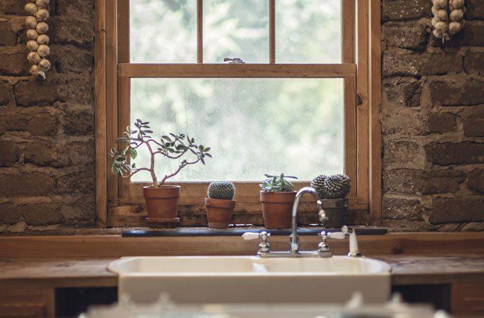 plante-de-casa-usor-de-intretinut