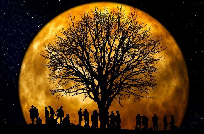 Cum sa va faceti arborele genealogic